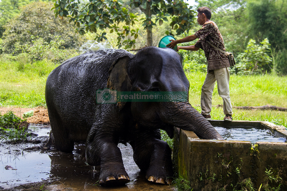 August 12, 2016 - Medan, North Sumatra, Indonesia - A guard with the Sumatran elephants were trained during bathed in Medan Zoo on August 12, 2016, Indonesia. At the World Elephant Day, habitat loss due to massive illegal logging and deforestation for palm oil plantation in Sumatra Island today only 1,724 Sumatran elephants remaining in the wild, down 39 percent from the 2007 population estimates. (Credit Image: © Ivan Damanik via ZUMA Wire)