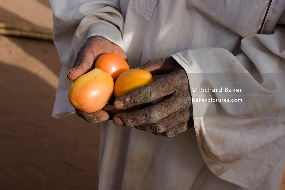 A tomato seller shows his fruit in the 4 sq km Abu Shouk refugee camp which is (disputedly) home to 38,000 displaced persons and families on the outskirts of the front-line town of Al Fasher (also spelled, Al-Fashir) in north Darfur.