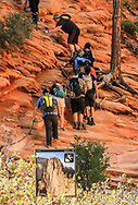 Clinging to safety chains, hikers begin final leg to Angels Landing. In 2014, Outside magazine listed Angels Landing one of the world's deadliest trails. In 2015, safety chains were installed. Photo taken May 12, 2016, at Scout Lookout, where the final approach to Angels Landing begins.