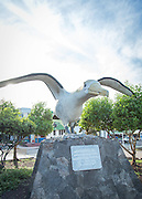 Waved Albatross Statue. Puerto Ayora Harbour, Santa Cruz Island, Galapagos Islands, Ecuador, South America