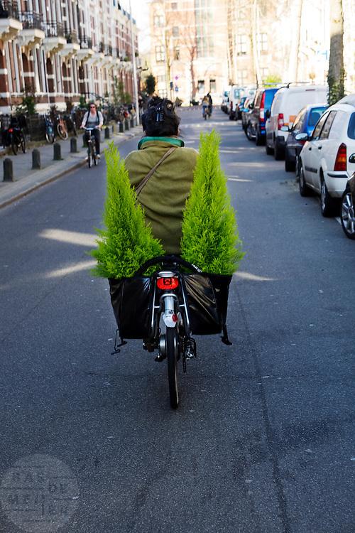 Een vrouw fietst met twee coniferen in haar fietstassen door Utrecht,<br /> <br /> A woman is cycling with two conifers in her bike bags.
