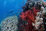 Underwater photography of a coral reef in the Red Sea Aqaba, Jordan