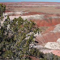 North America, USA, Arizona, Painted Desert. Pintado Point in Painted Desert, part of the Petrified Forest National Park.
