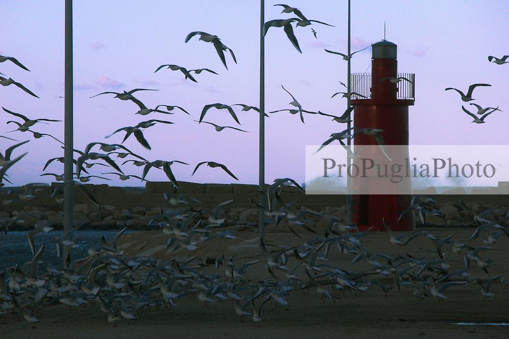 Gabbiani sul porto