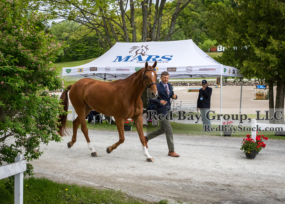 Boyd Martin (USA) and Fernhill Prezley at the MARS EQUESTRIAN Bromont CCI Three Day Event in Bromont, Quebec.