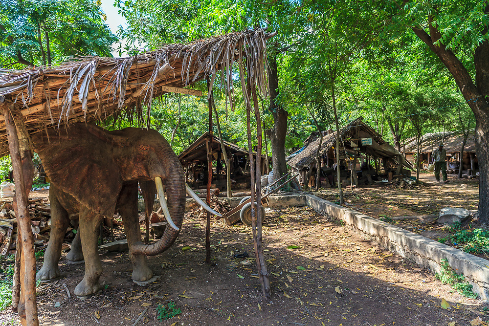 A huge wooden handcrafted elephant in the Akamba Handicrafts Cooperative in Mombasa, Kenya. A group of about 100 carvers started the Akamba Handicraft Industry Co-operative Society in 1963, and nowadays it is a membership of nearly 2,800 active Members and more than 7000 nonmembers.