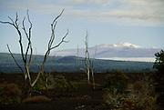 Devastation Trail, Mauna Kea in Background, HVNP, Island of Hawaii