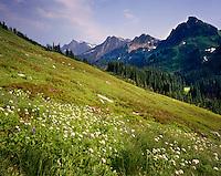 Alpine Meadows at Buck Creek Pass, Glacier Peak Wilderness Washington USA