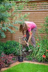 Planting a pot grown shrub in a border