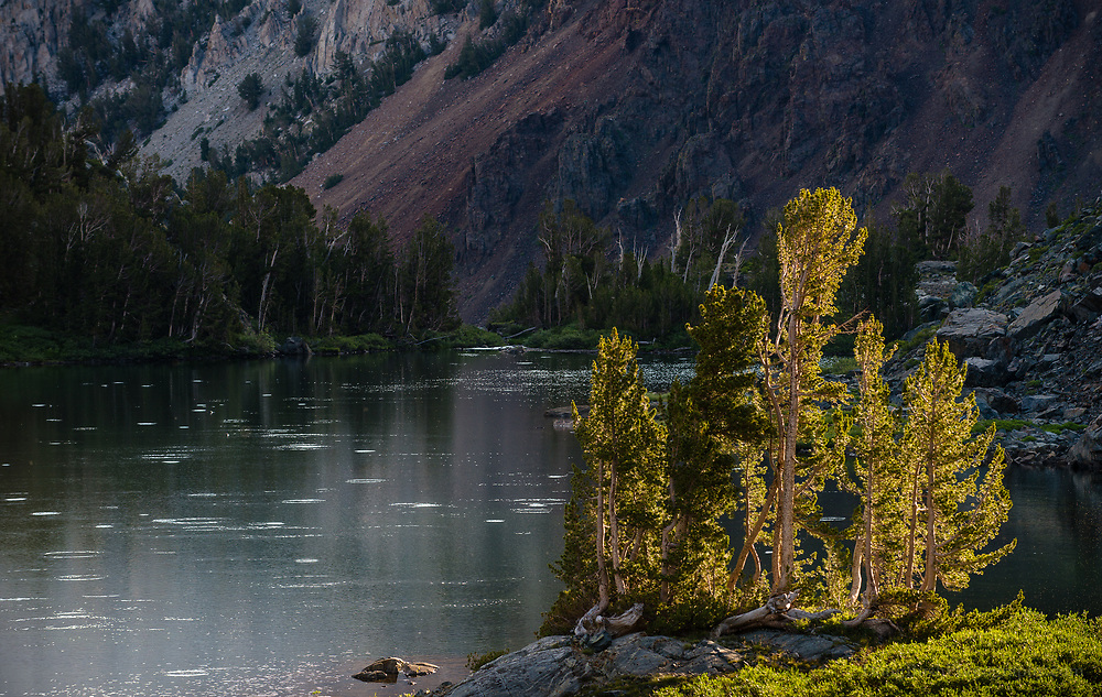 Fish rise at lower Hoover Lake, Hoover Wilderness, California.