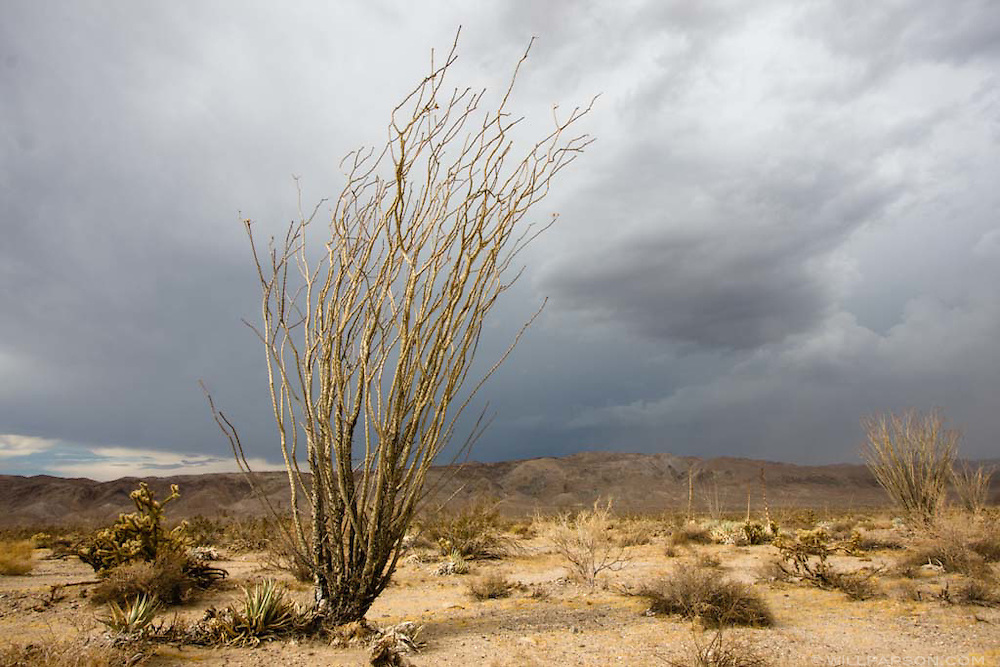 Anza Borrego Desert, San Diego County, California