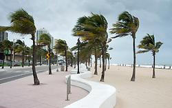 Palm trees blow along the ocean as winds pick up in anticipation for Hurricane Irma Saturday, September 9, 2017 in Fort Lauderdale, FL, USA. Photo by Paul Chiasson/CP/ABACAPRESS.COM