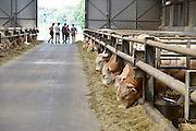Nederland, Berkel Enschot, , 15-6-2014 Open boerderijdag bij een vleesveebedrijf. Belangstellenden, vooral gezinnen met kinderen, kunnen kijken in de stal bij de Blonde Aquitaine koeien en stieren. Er zijn speeltoestellen en andere ontspanning voor de kinderen. Dit bedrijf heeft van de dierenbescherming twee sterren Beter Leven voor hun diervriendelijke en duurzame bedrijf.Foto: Flip Franssen/Hollandse Hoogte