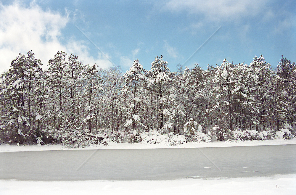 Snow covered trees by a pond in East Hampton,NY
