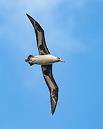 HAWAII COASTAL BIRDS