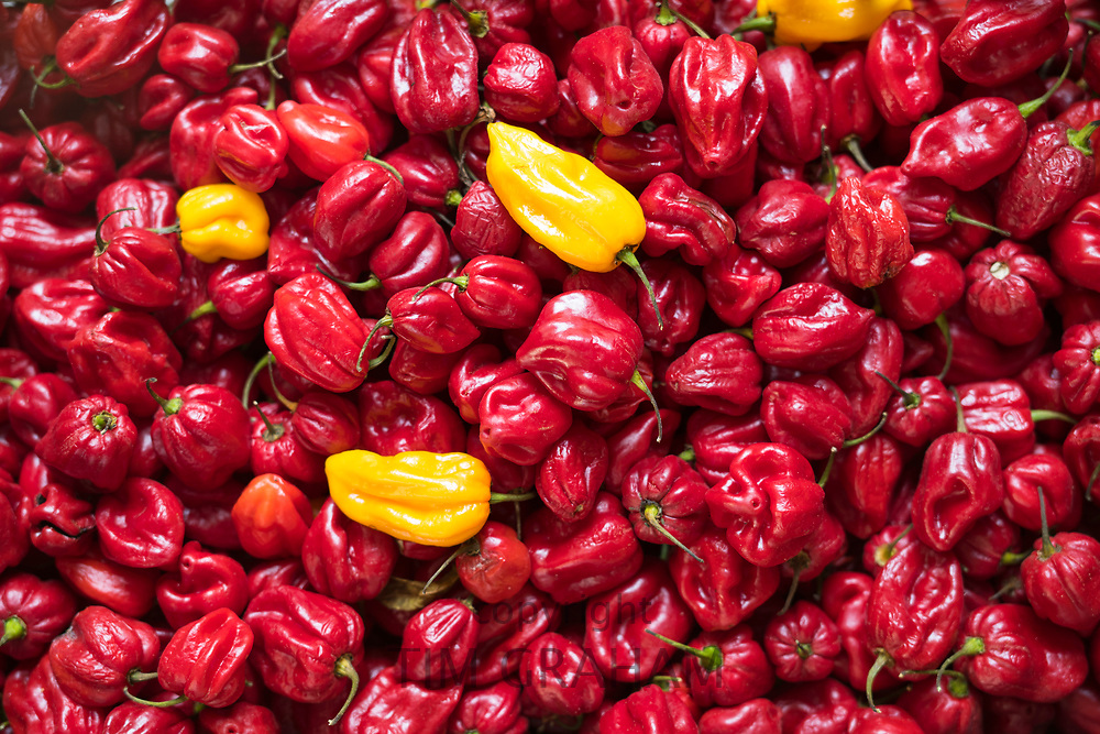 Bright coloured peppers - pimentos - yellow peppers contrast with red colour at food market in Italy<br /> FINE ART PHOTOGRAPHY by Tim Graham