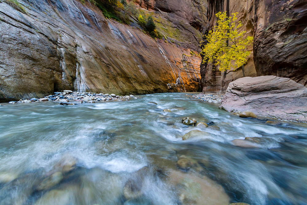 The canyon walls begin to glow from the early morning sun in The Narrows in Zion National Park in Southwest Utah.