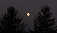 Middletown, NY - The full moon shines between two evergreen trees on the morning of Dec. 24, 2007.