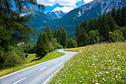 Route past Alpine flower meadows in the Swiss National Park, the Swiss Alps, Switzerland