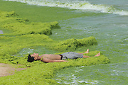 QINGDAO, CHINA - JULY 18: <br /> <br /> The sea grass turns white at a beach on July 18, 2016 in Qingdao, Shandong Province of China. The enteromorpha prolifera spread on the beaches in Qingdao and were under clearing. <br /> ©Exclusivepix Media