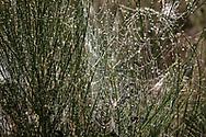 a spider web with dew drops in the Wahner Heath, Cologne,  North Rhine-Westphalia, Germany.<br /> <br /> Spinnennetz mit Tautropfen in der Wahner Heide, Cologne, Nordrhein-Westfalen, Deutschland.