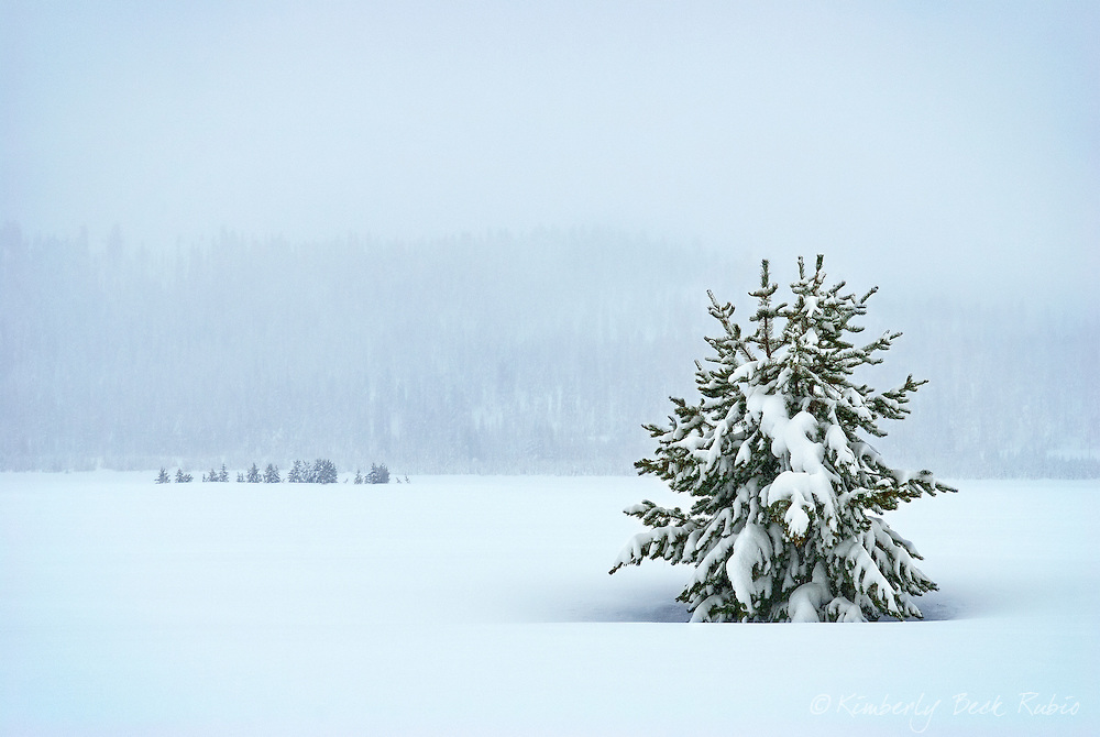 Beautiful winter landscape during a snow storm, with a solitary tree surrounded by a blanket of snow.