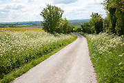 White pathways on chalk downland Allington Down, Wiltshire, England