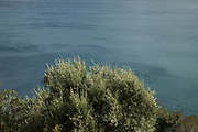 View out towards the Mediterranean Sea over the leaves of an olive tree on 16th September 2017 in Bastia, Corsica, France. Bastia is a French commune in the Haute-Corse department of France located in the north-east of the island of Corsica at the base of Cap Corse. Bastia is the principal port and commercial town of the island. The inhabitants of Bastia are known as Bastiais or Bastiaises.