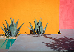 Beneath a Mexican Sky Garden, Agave americana in front of brightly coloured painted walls.  Design: Manoj Malde, Built by: Living Landscapes, Sponsored by: Inland Homes PLC