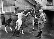 Horse at Col. Joseph Hume-Dudgeon's Stables, Merville House.<br /> 19/11/1958