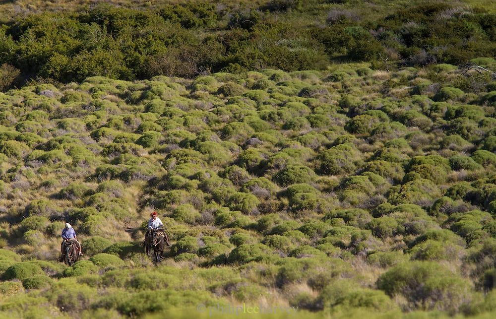 Gaucho's on horseback cross plain, Estancia Huechahue, Patagonia, Argentina, South America