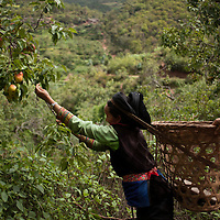 A kind local woman insists that I eat fruit, in a village outside of Nanhua, Yunnan province, China.