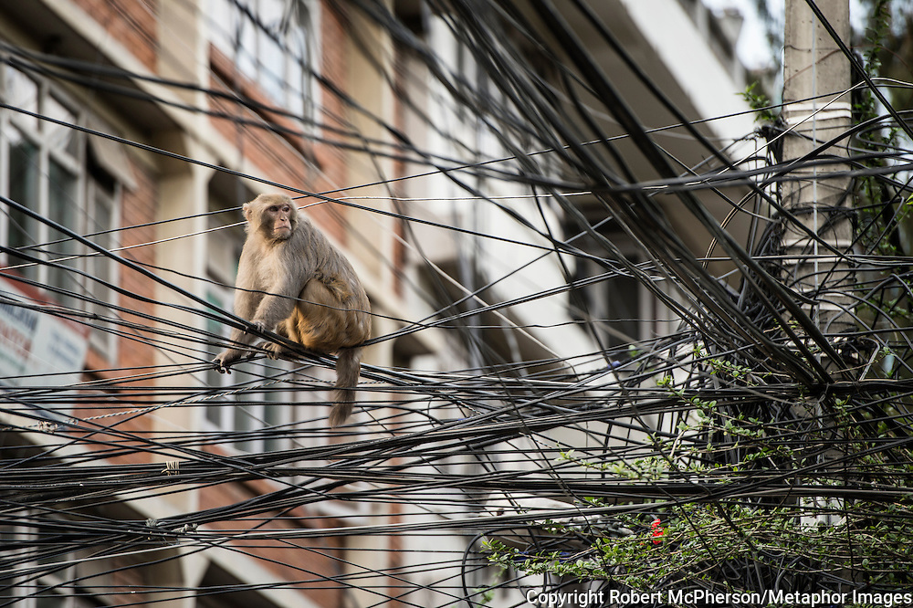 Monkey`s navigate through the city on power grids in Thamel, Kathmandu. Nepal is the second richest country in water resource but they still meet challenges with building hydropower. Everyday electric current goes off for hours and people are compelled to live in the darkness. Norway is one of the countries who have earned a lot of money on building hydropower in Nepal, but the country itself still remains poor and undeveloped. After the earthquakes that struck Nepal in 2015 the situation is even worse.