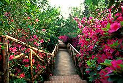Stock photo of the bridge in the Azalea Garden of Bayou Bend Park