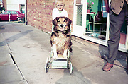 Young girl pushing pet dog in 1970s Comfifolda pushchair, UK