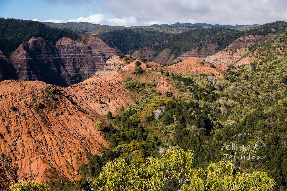 Kohua Ridge, Waimea Canyon, Koke'e, Kauai, Hawaii