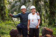 A married couple of smallholder farmers ustand in front of harvested fruit bunches on their plantation in Ukui, Riau Province, Indonesia, on 15 June 2015. They have been able to put 2 children through university on the proceeds from their 2 hectare site. This area has become dominated by palm oil production, and some smallholder farmers have formed co-operatives to share costs, increase access to markets, and become certified by the Roundtable on Sustainable Palm Oil. He is part of Amanah, a local cooperative that has helped over 400 farmers become RSPO certified - reducing their use of pesticides and fertilizers, increasing yields, and improving farm management.