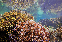 An underwater coral garden near the edge of Montgomery Reef.