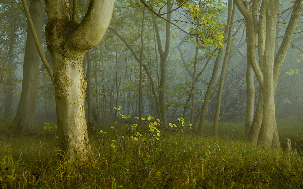 Another from the woods at Ickworth