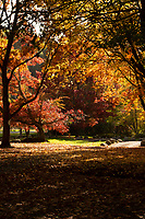 HUNTERVILLE, New Zealand - An autumn scene in Queens Park in the little town of Hunterville on New Zealand's North Island. Picture: Giordano Stolley/Allied Picture Press/APP