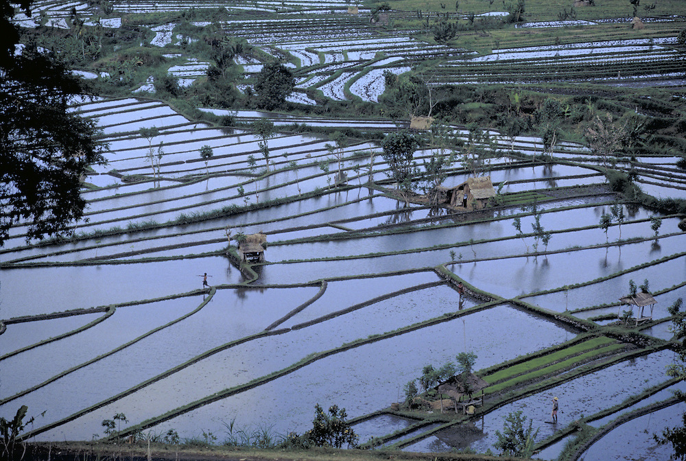 Flooded rice paddies from a hillside near Tirtaganga, Bali, Indonesia.  CD scan from 35mm film. © John Birchard