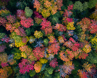 Colorful forest canopy in Vermont during peak autumn color.