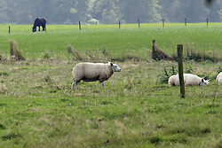 Herfst weide<br /> Beckum 2004<br /> Photo © Hippo Foto