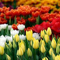 Melbourne International Flower and Garden Show,