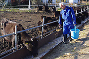 "The Radioactive Man who returned to Fukushima to Look after the Animals that everyone else left behind<br /> <br /> The untold human suffering and property damage left in the wake of the Fukushima disaster in Japan has been well-documented, but there's another population that suffered greatly that few have discussed – the animals left behind in the radioactive exclusion zone. One man, however, hasn't forgotten – 55-year-old Naoto Matsumura, a former construction worker who lives in the zone to care for its four-legged survivors.<br /> <br /> He is known as the 'guardian of Fukushima's animals' because of the work he does to feed the animals left behind by people in their rush to evacuate the government's 12.5-mile exclusion zone. He is aware of the radiation he is subject to on a daily basis, but says that he ""refuses to worry about it."" He does take steps, however, by only eating food imported into the zone.<br /> <br /> Mr matsumura went on to say, "" I can't imagine what's going to happen to me next, but I believe it's my battle to stay here.<br /> <br /> Currently I catch cows roaming around the town and contain them at my ranch I built by my home. I also try to prevent from breeding by having bulls castrated. And I'd like to watch over these animals until they naturally die.<br /> <br /> It is livestock, but I think we are allowed to kill them only when we eat them. I can't put up with cows getting killed just because they were contaminated. They have life just like ours""<br /> ©Naoto Matsumura/Exclusivepix Media"