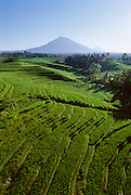 Aerial of terraced fields in central Bali.