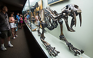 Visitors at the Page Museum in front of a Saber-toothed tiger skeleton recovered from the LaBrea Tar Pits  on display at the Page Museum in Los Angeles' Hancock Park.
