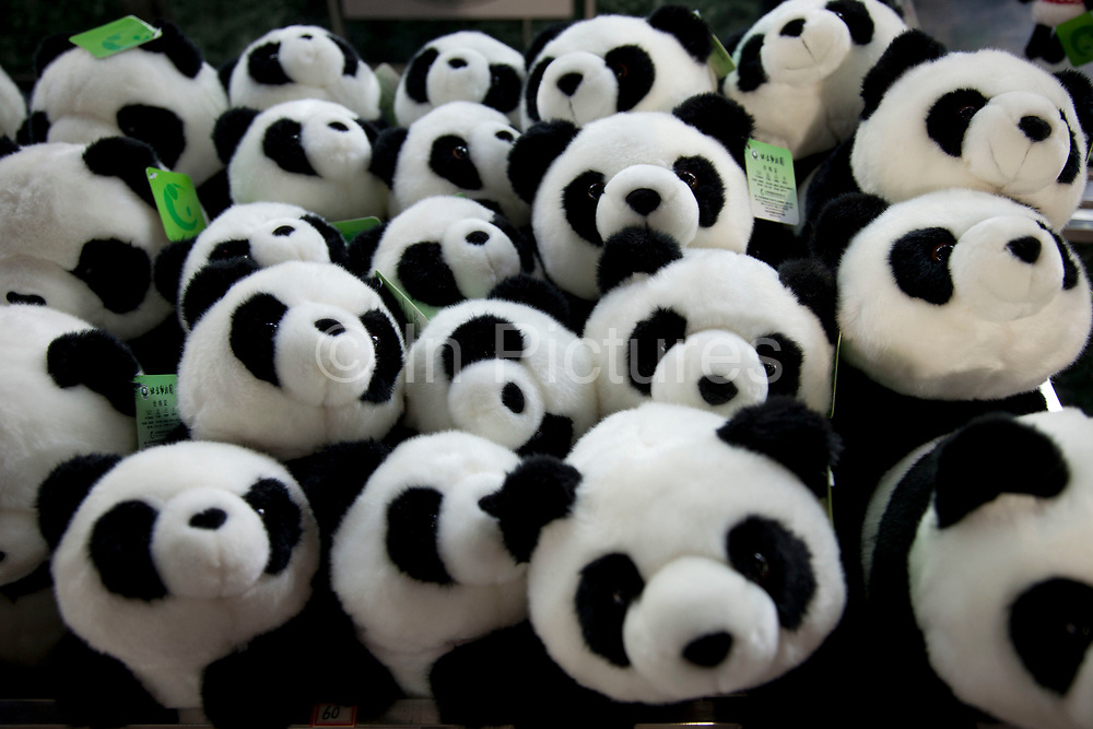 Giant Pandasoft toys for sale at a souvenir shop at Beijing Zoo. Beijing, China. Located in the Xicheng District. Beijing Zoo is best known for its collection of rare animals endemic to China including the Giant Pandas, which are zoo's most popular animals.