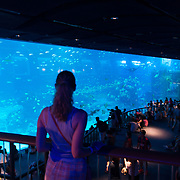 Girl Near Giant Panoramic Panel Of Sentosa SEA Aquarium, Singapore