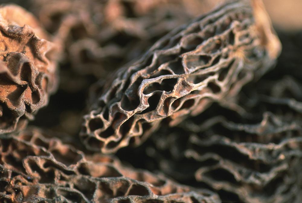 Close up selective focus photo of Morel Mushrooms